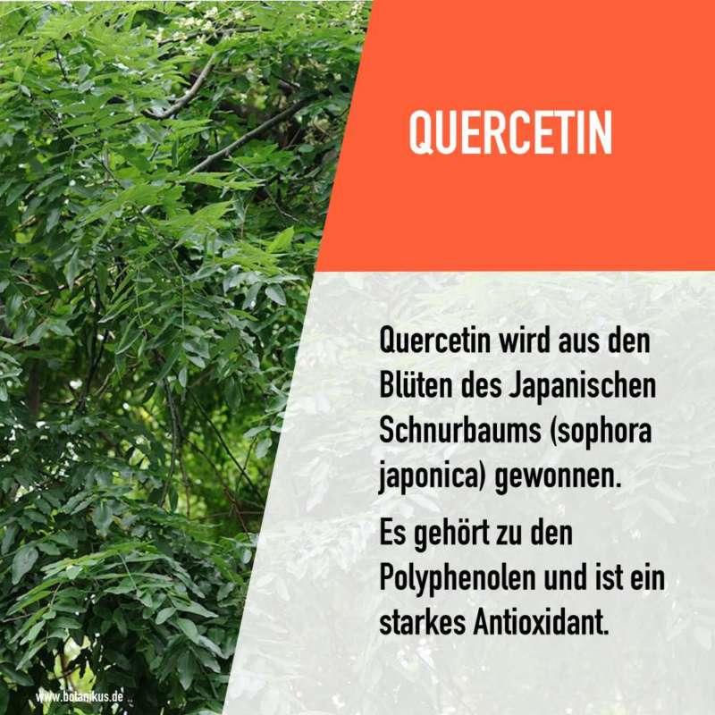 quercetin_opc