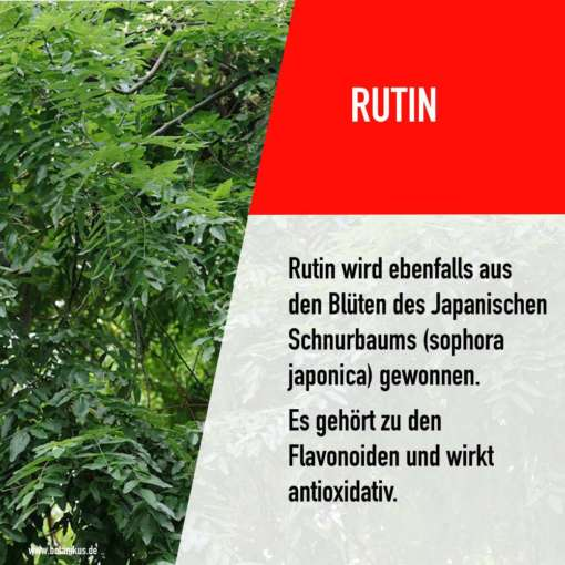 rutin_opc