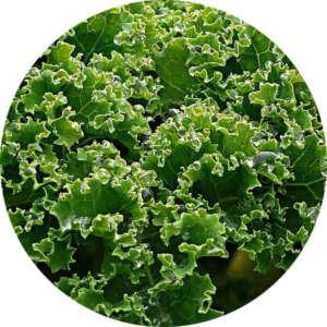 salat vitamin k2