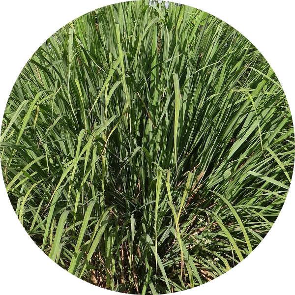 vitamin k2 pflanzlich