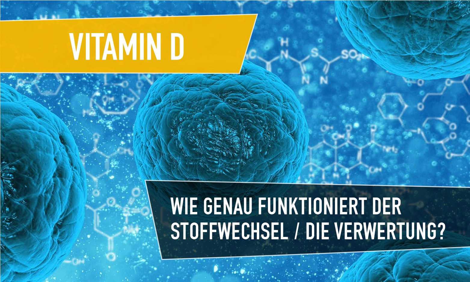Vitamin Stoffwechsel